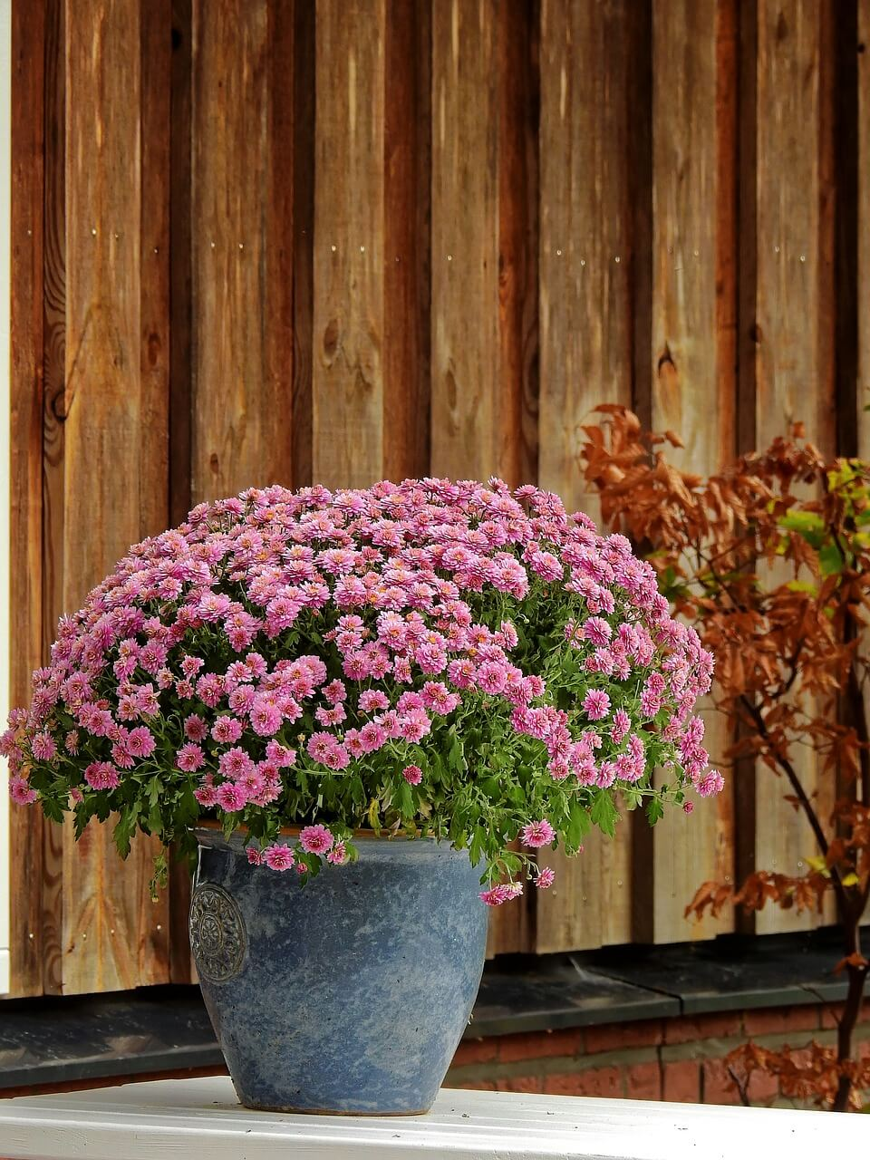 Balkon-Kuebelpflanzen-winterfest-machen