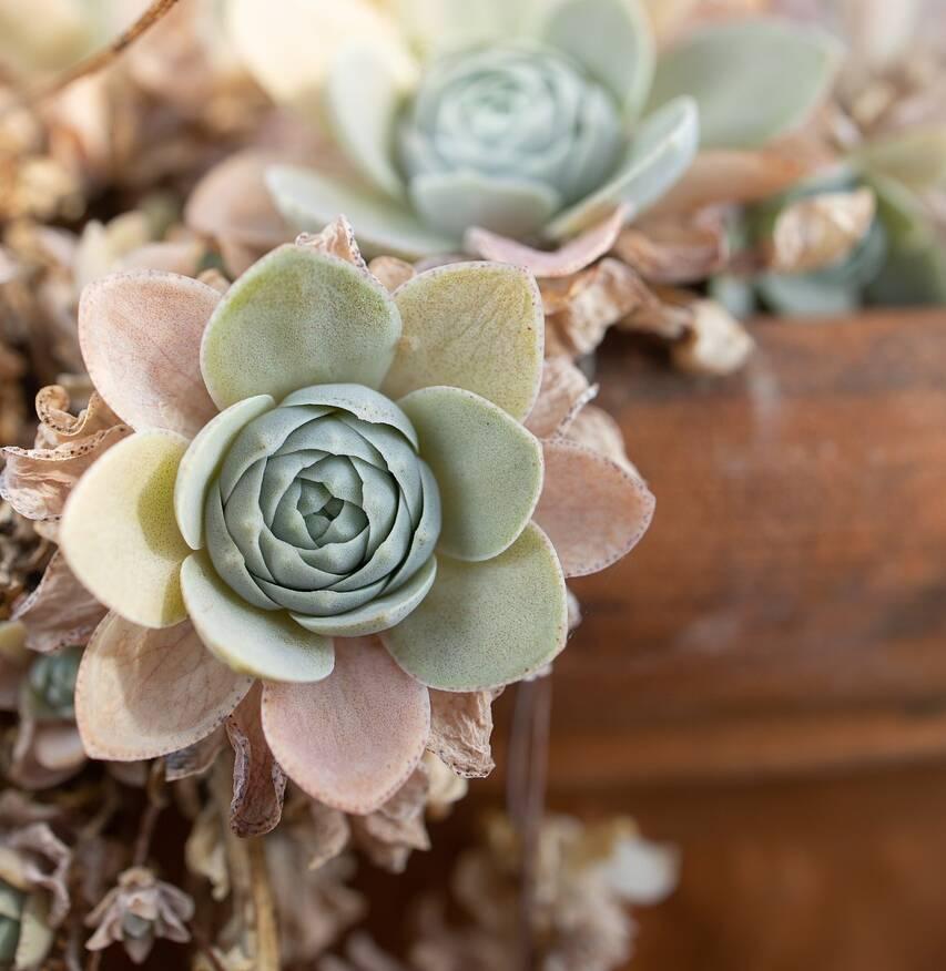 Dachterrasse gestalten mit kleinen Pflanzen als Tisch Deko