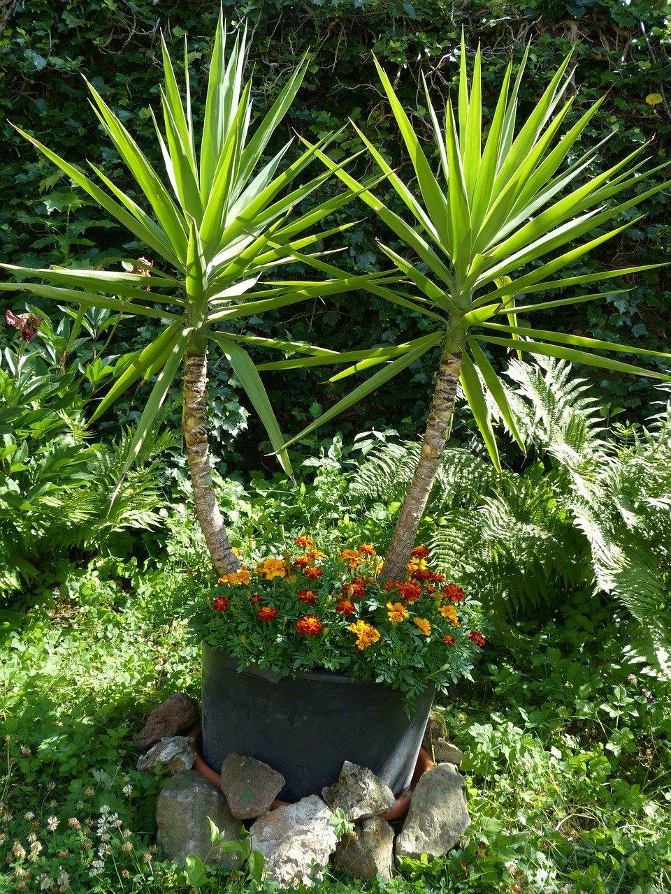 Dachterrasse gemütlich gestalten mit Palmen für Strand Feeling
